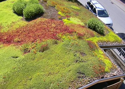 Bockheim Gartenbau - Dachbegrünung